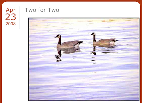 geese on the Columbia River photo