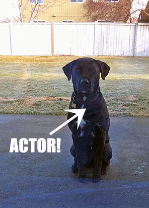 sparky-actor