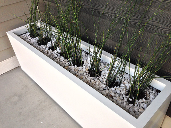 The Horsetail Reed Experiment